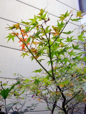 CIMG5995.2007.12.5.jpg