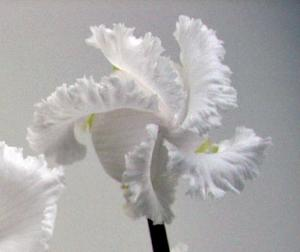 CIMG8033.2006.12.21.jpg