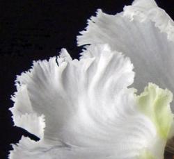 CIMG8244.2007.1.5-2.jpg
