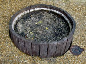 CIMG8607.2007.1.20.jpg