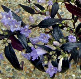 CIMG9146.2007.2.24-2.jpg