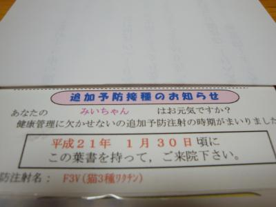 DSC01398_convert_20090119210113.jpg