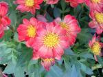 町で見かけた花シリーズ08291