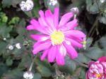 町で見かけた花シリーズ08294