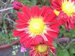 町で見かけた花シリーズ08304
