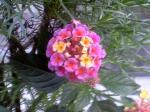 町で見かけた花シリーズ08309