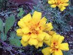町で見かけた花シリーズ08324