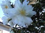 町で見かけた花シリーズ08329