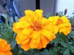 町で見かけた花シリーズ08338