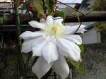 町で見かけた花シリーズ08346