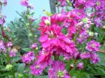 町で見かけた花シリーズ08356
