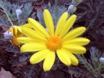 町で見かけた花シリーズ08357