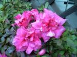 町で見かけた花シリーズ08359