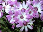 町で見かけた花シリーズ09hana002
