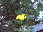 町で見かけた花シリーズ09hana016
