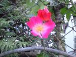 町で見かけた花シリーズ09hana018