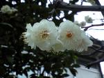 町で見かけた花シリーズ09hana024