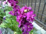 町で見かけた花シリーズ09hana025