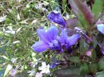 町で見かけた花シリーズ09hana028