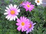 町で見かけた花シリーズ09hana038