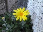 町で見かけた花シリーズ09hana042