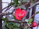 町で見かけた花シリーズ09hana043