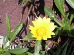 町で見かけた花シリーズ09hana044