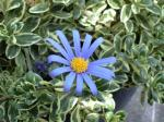 町で見かけた花シリーズ09hana055
