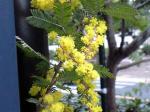 町で見かけた花シリーズ09hana069