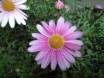 町で見かけた花シリーズ09hana072