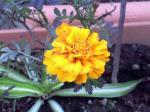 町で見かけた花シリーズhana09077