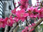 町で見かけた花シリーズhana09085