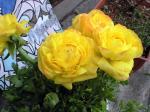 町で見かけた花シリーズhana09088