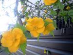 町で見かけた花シリーズhana09105