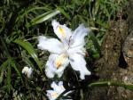 町で見かけた花シリーズhana09116