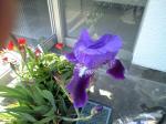 町で見かけた花シリーズ09118