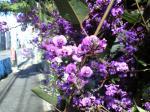 町で見かけた花シリーズhana09120
