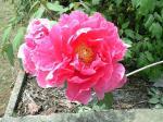 町で見かけた花シリーズhana09133