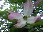 町で見かけた花シリーズhana09135