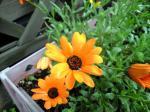 町で見かけた花シリーズhana09140