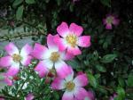 町で見かけた花シリーズhana09141