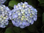 町で見かけた花シリーズhana09145