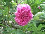 町で見かけた花シリーズhana09150