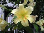 町で見かけた花シリーズhana09167