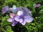 町で見かけた花シリーズhana09190