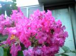 町で見かけた花シリーズhana09225