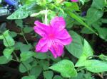 町で見かけた花シリーズhana09229