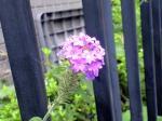 町で見かけた花シリーズhana09234