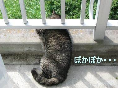 goma_kansatsu1.jpg