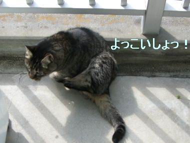 goma_kansatsu2.jpg